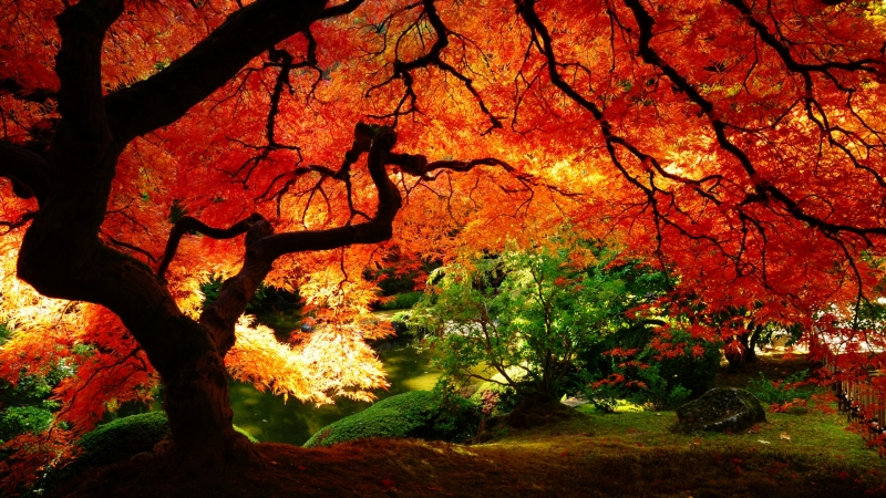wallpaper autumn creative - photo #17